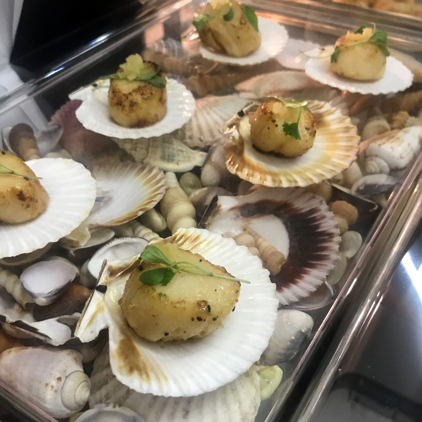 Dine Events Catering | Seared Scallops with pickled ginger, coriander